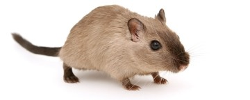 Link to Find out about our pest control service content